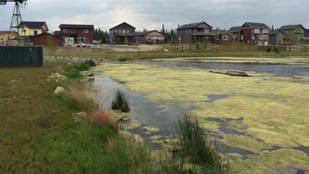 L'étang artificiel Rain Garden dans le quartier Whistle Bend, à Whitehorse au Yukon. (CBC)