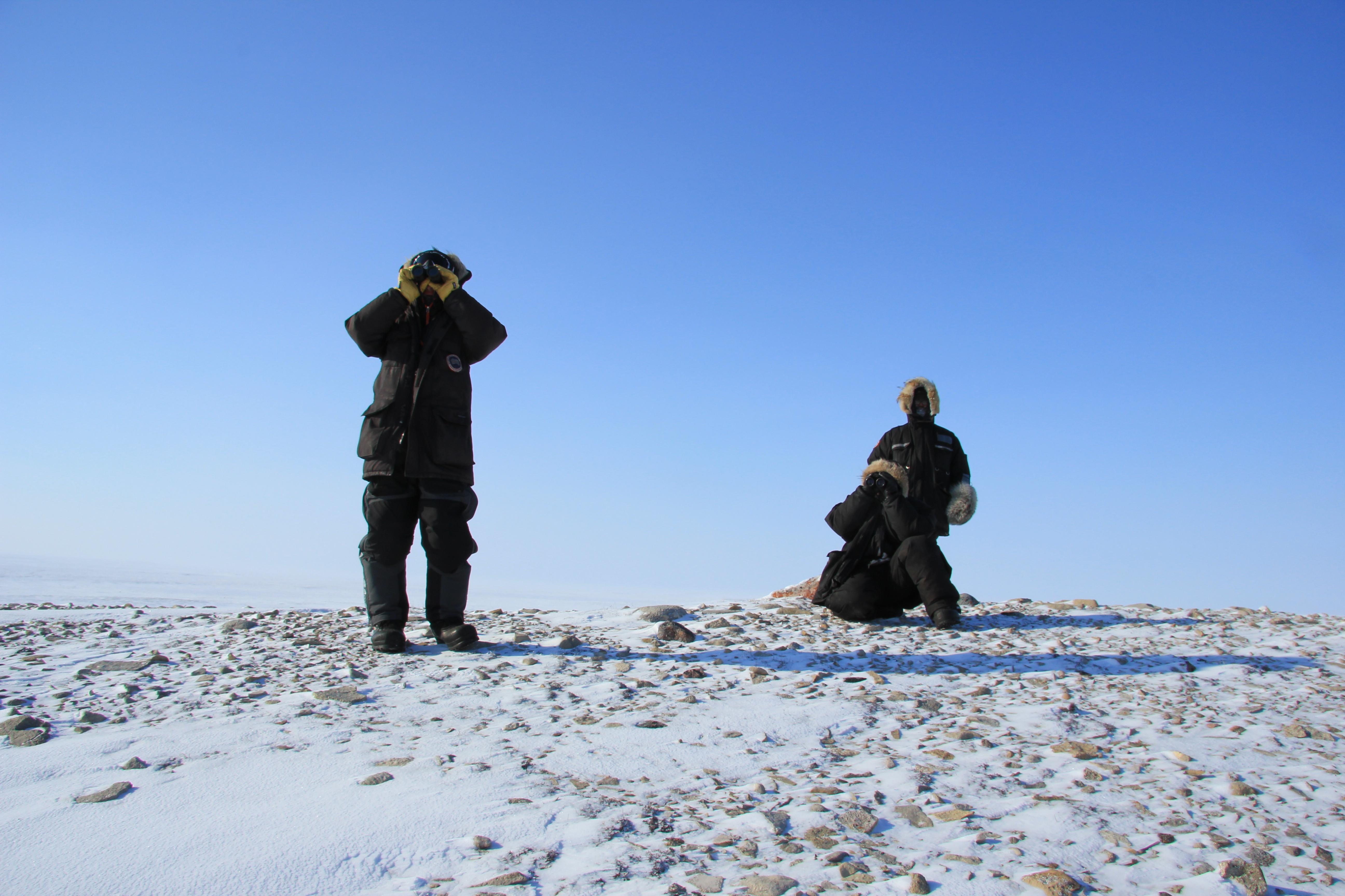 Après plusieurs heures, les chasseurs de Cambridge Bay Ryan Angohiatok (à gauche), Roland Emingak (à droite) et Colin Amegainek (assis) scrutent l'horizon avec leurs jumelles du haut d'une colline pour tenter de repérer au loin des boeufs musqués. (Eilís Quinn/Regard sur l'Arctique)
