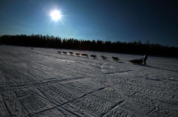 Des chiens de traîneaux à la course Iditarod en Alaska. (Jim Watson/AFP/Getty Images)