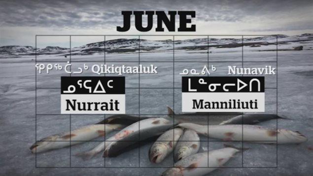 12-mois-langue-inuite-calendrier-nord-canada-5