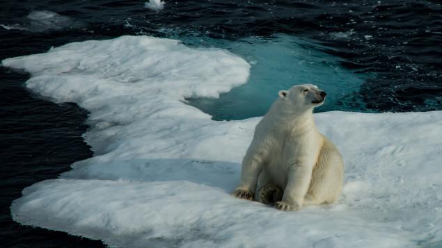 rechauffement-arctique-plus-rapide-plus-devastateur-que-prevu