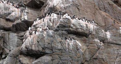 aller-au-nunavut-et-constater-notre-impact-sur-les-oiseaux-1