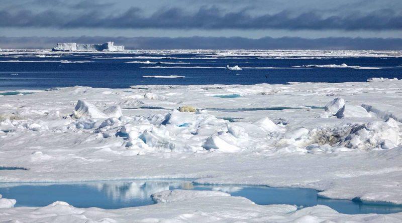 les-changements-climatiques-bouleversent-lhabitat-des-ours-polaires-1