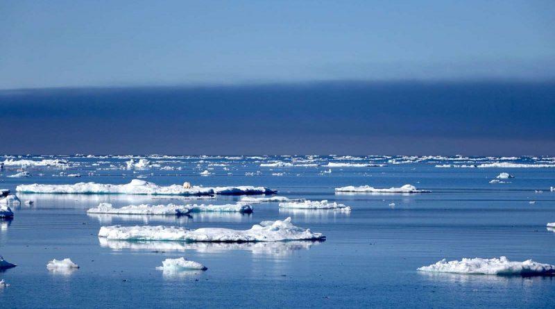 les-changements-climatiques-bouleversent-lhabitat-des-ours-polaires-3