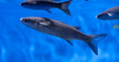 le-rechauffement-des-oceans-risque-de-reduire-la-taille-des-poissons