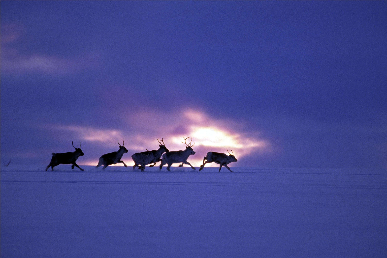 Finnmarksvidda I (Courtoisie de Fred Ivar Utsi Klemetsen)
