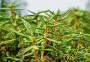 Les trésors moléculaires des plantes du Nord québécois