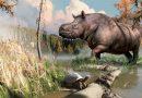 Des rhinocéros dans le Nord canadien il y a 8 millions d'années