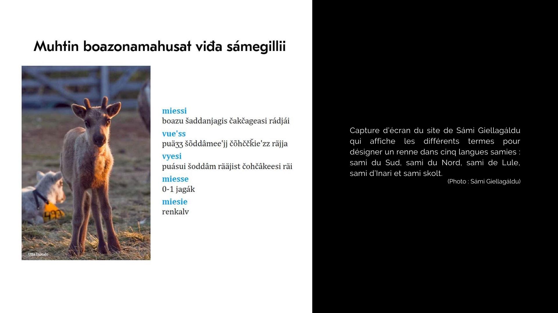 Capture d'écran du site de Sámi Giellagáldu qui affiche les différents termes pour désigner un renne dans les cinq langues samies: sami du Sud, sami du Nord, sami de Lule, sami d'Inari et sami skolt. (photo: Sámi Giellagáldu)