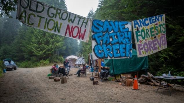 法院:示威者需拆除温哥华岛路障准许伐木